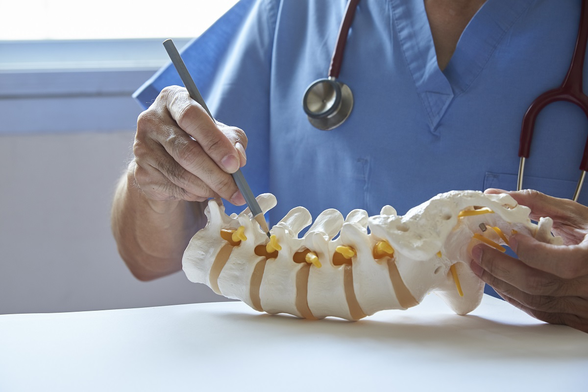 lumbar vertebra model - orthopedic surgeon